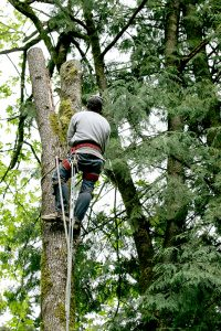 Best-Tree-Service-burrlingotn-nj