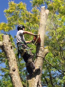 best new jersey tree removal service