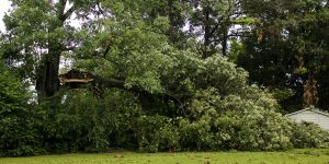 Tree Service Estimate In New Jersey