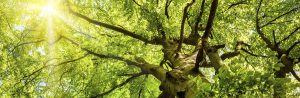 Best New Jersey Tree Service