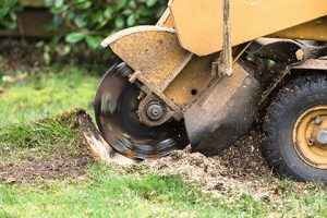 stump grinding company south new jersey