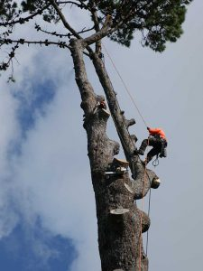 Tree-Removal-in-burrlington-county-nj