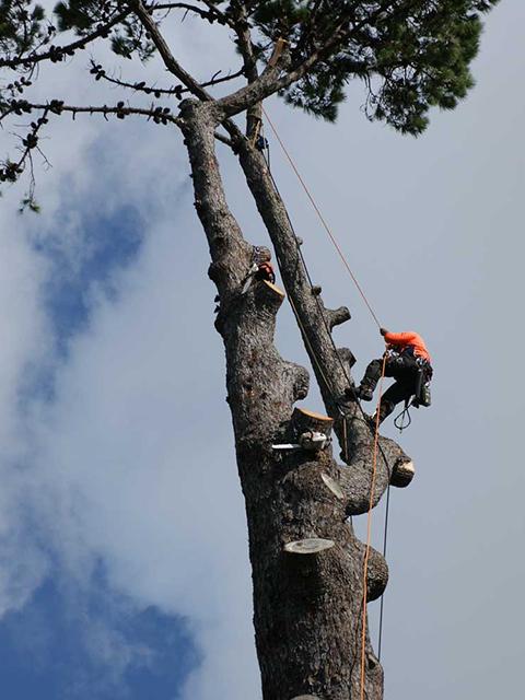 Tree-Removal-in-burrlington-county-nj