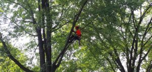 burrlington-county-nj-Tree-Trimming