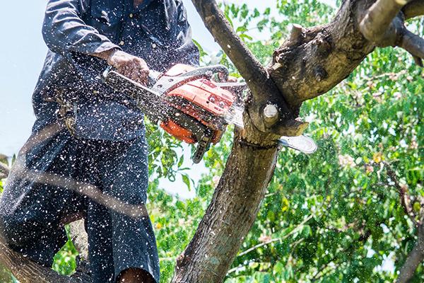 burrlington-county-nj-Tree-Trimming-Job