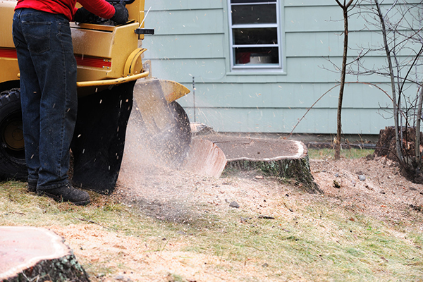 stump grinding Morrisville NJ