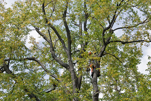 tree removal in Bon Air