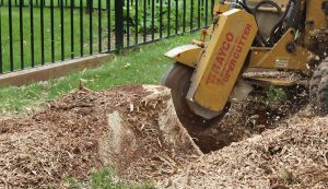 new jersey stump grinding service