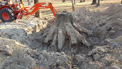 removing a stump in burrlington county nj