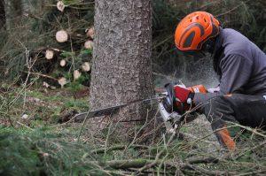 removing a tree in burrlington nj