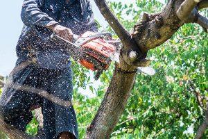 top-Tree-Service-burlington-county