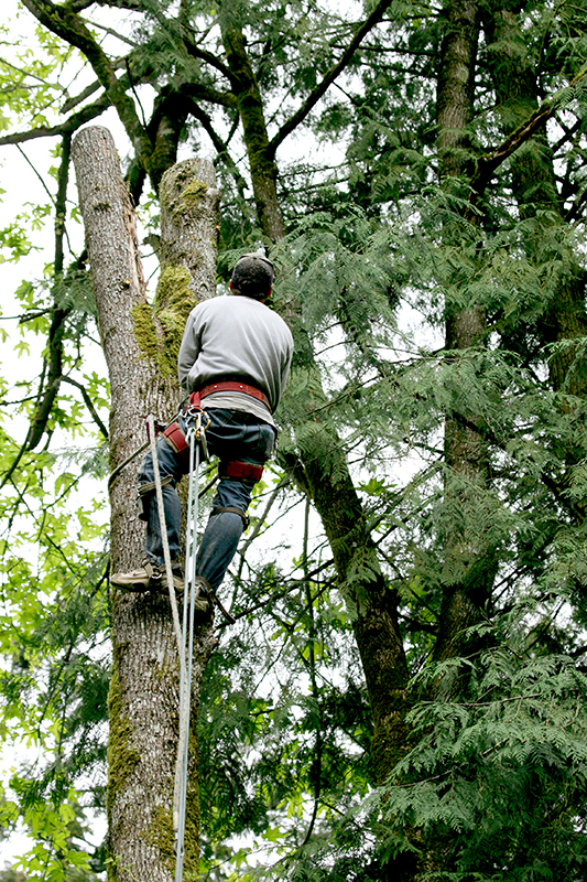 top-Tree-Service-burrlington-county