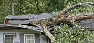 tree-damage-to-a-roof-in-burrlington-nj