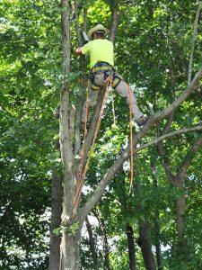 trimming-a-tree-in-burrlington-nj